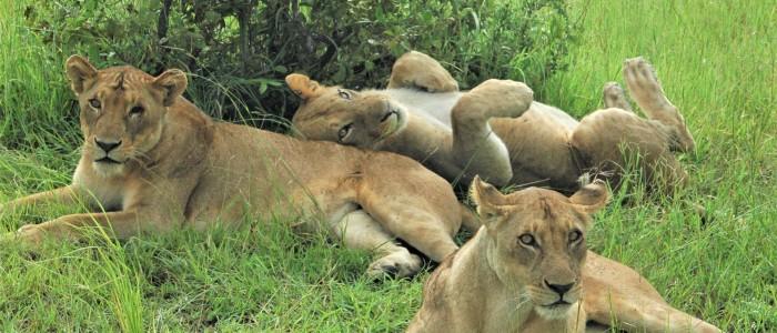 Pirschfahrt Serengeti