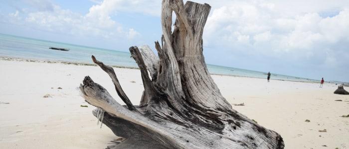 jambiani-beach-timo