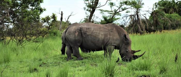 Zino Rhino Sanctuary Meine Welt Reisen
