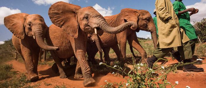 Das-Elefantenwaisenhaus-in-Nairobi-4.jpg