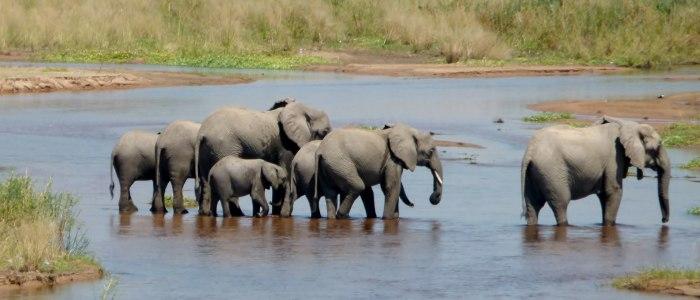 Elefanten-im-raha-nationalpark