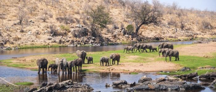 Elephants_1_Tanzania Tarangire Meine Welt Reisen