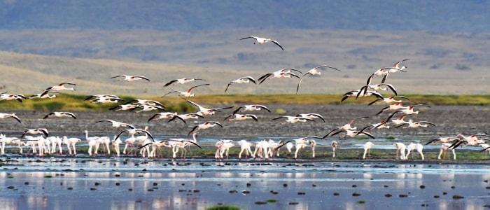 Flamingos_2_Tanzania-Experience.jpg