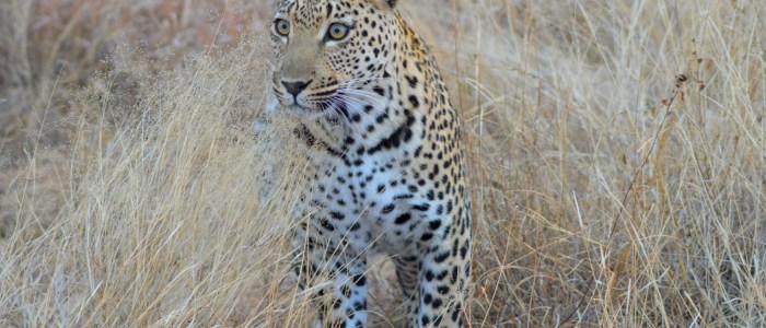 Leopard_3_SA-Experience.jpg