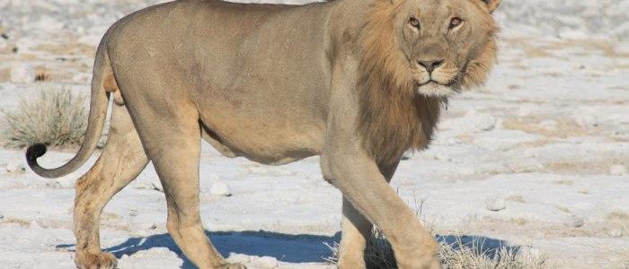 etosha-nationalpark-namibia-meineweltreisen
