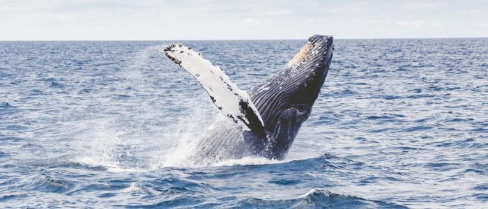 hermanus-whalewatching-meineweltreisen