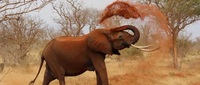 elephant-tsavo-ost-meine-welt-reisen.jpg