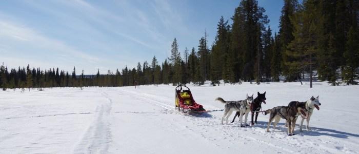 hundeschlitten-husky-tour-finnland.jpeg