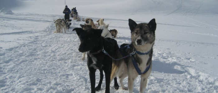 hundeschlitten-wildnis-schweden.jpg