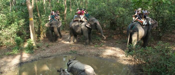 nepal chitwan nationalpark elefanten safari