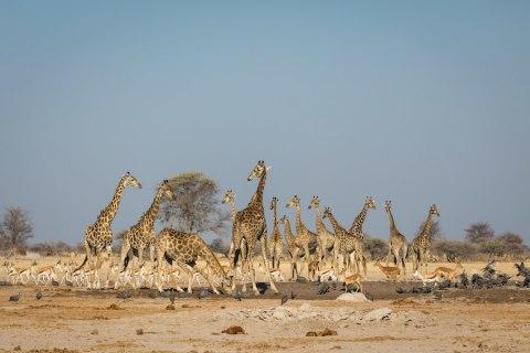 Kalahari Campingsafari