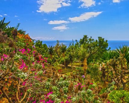 Botanischer Garten_Funchal