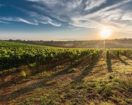 Kroatien_Weingebiet