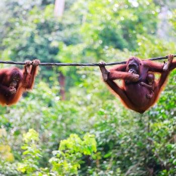 Durch das tropische Paradies von Malaysia