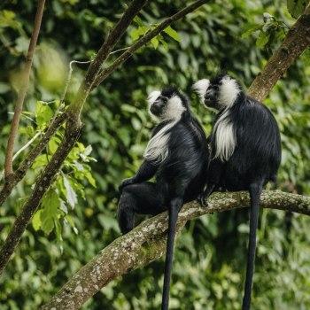 Auf den Spuren der Primaten