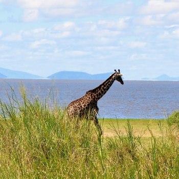 Tansanias Norden exklusiv erleben