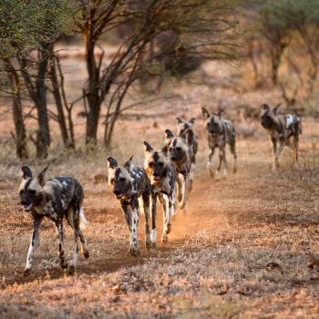 Tansanias wilder Süden