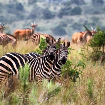 Ruanda exklusiv entdecken