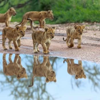 Vom Regenwald in die Savanne
