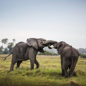 Von der Serengeti an Pemba Islands Traumstrände