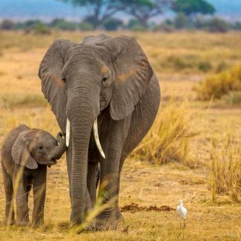 Luxus Safari durch Kenia