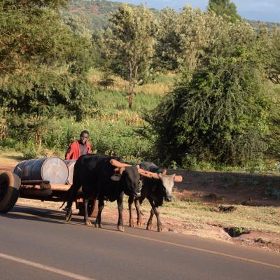 Auf eigene Faust zum Ngorongoro Krater