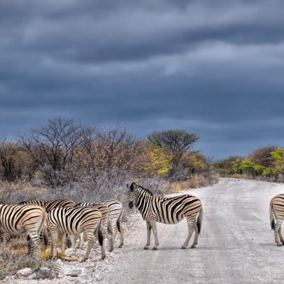 Namibia Querbeet