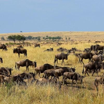 Masai Mara und Strandurlaub