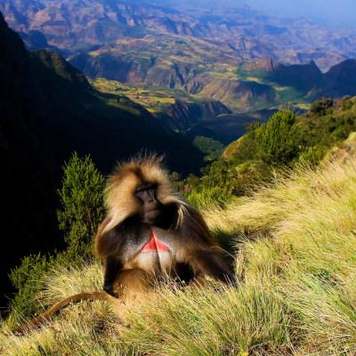 Simien Mountain Trekking zum Ras Dashen