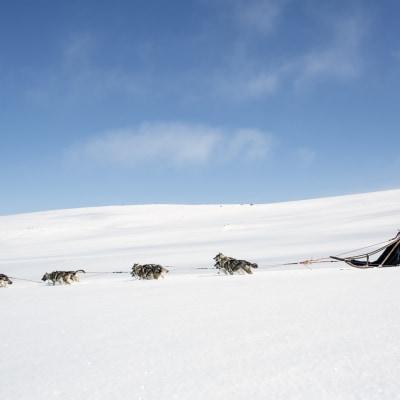 Husky Wildnis Abenteuer