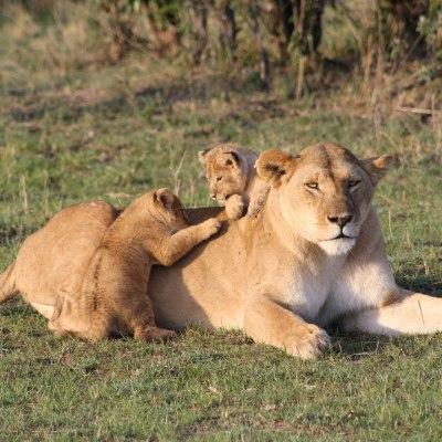 Kenias Nationalparks & Strand