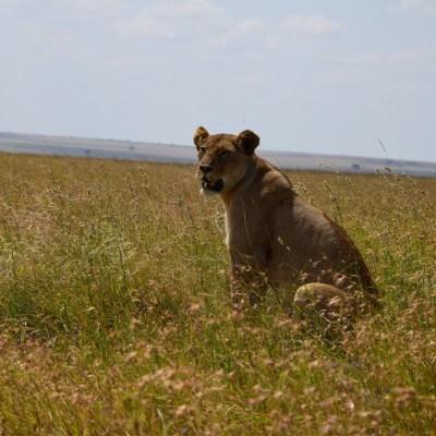 Klassiker Safari & Sansibar