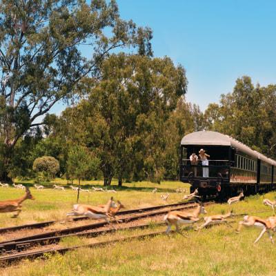 Traumreise mit dem Rovos Rail