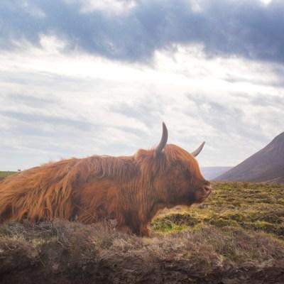 Die Highlands entdecken