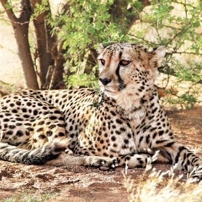 Namibias wilder Süden