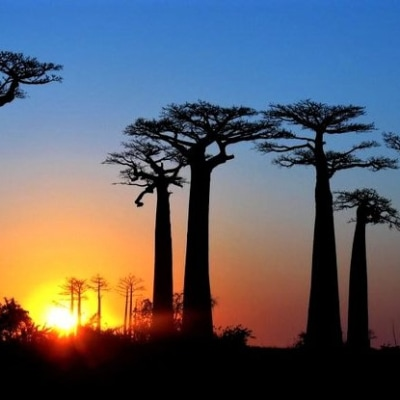 Im Land der Baobab