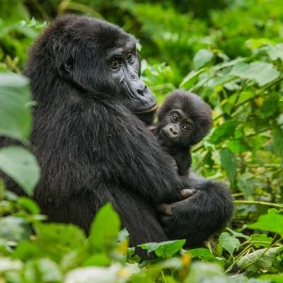 Die Ganze Schönheit Ugandas