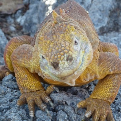 5 Tage / 4 Nächte Inselhopping Galapagos