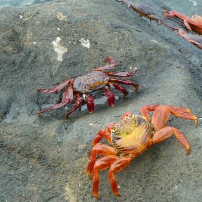 Ecuador Rundreise und Galapagos Inselhopping