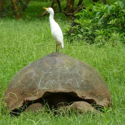 5 Tage/ 4 Nächte Inselhopping Galapagos