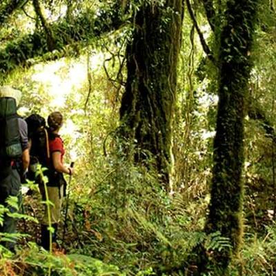 Chiloé Sendero Transversal