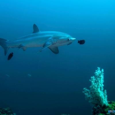 Sea Explorer Philippines - InterDive Messespecial
