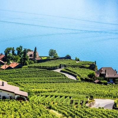 Flanieren und degustieren entlang des Genfer Sees