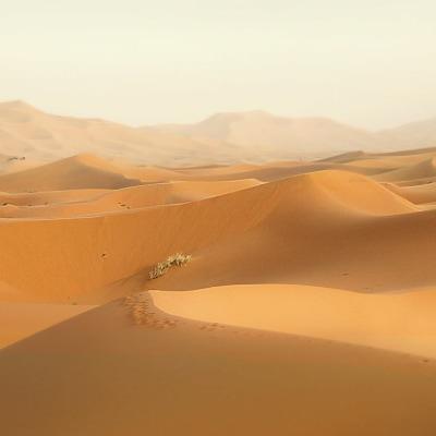 Gebirge, Oasen & Wüste. Erleben Sie den Zauber von Marokkos südlichem Inland und der roten Stadt Marrakesch