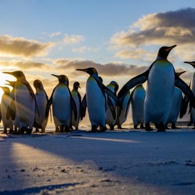 Unsere 15 Tage große Falkland Natur und Fotoreise