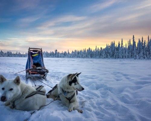 Huskys unter Nordlichtern
