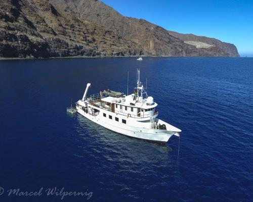 Socorro Highlight 2021 - Riesenmantas, Haie und Delfine!