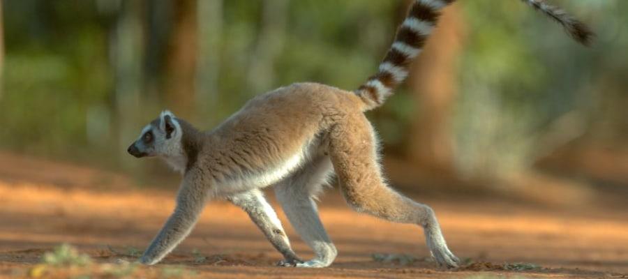 Auf nach Antananarivo