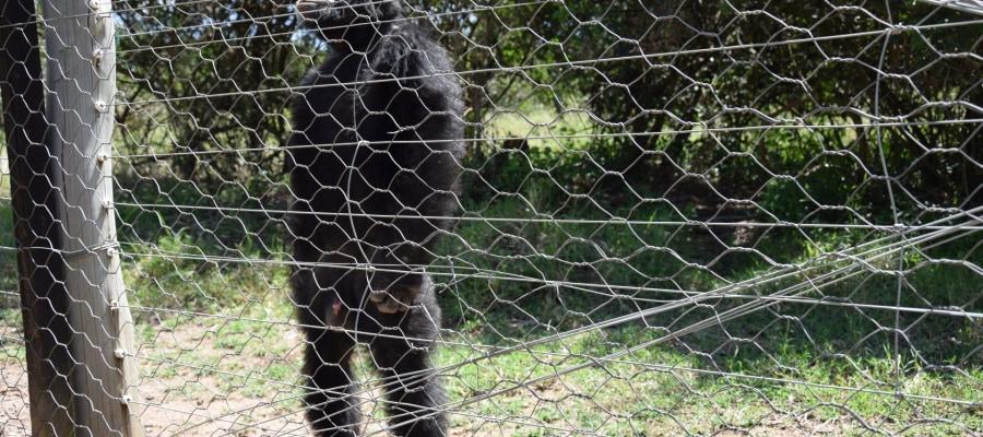 Schimpansen Schutzanlage MeineWelt Reisen