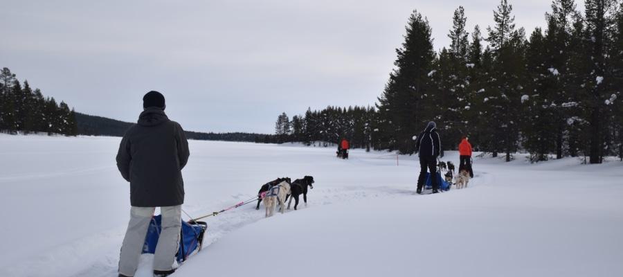 finnland-winter-hundeschlitten-husky